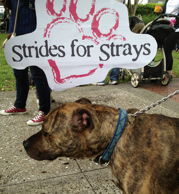 otena-concepts-HSOBC-walk-for-the-animals-24